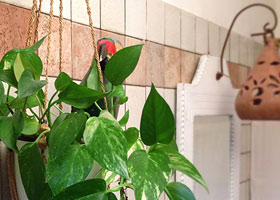 Bathroom - Holiday House in San Felice Circeo in the Circeo National Park